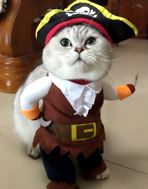 Pirate-Cat-Costume3